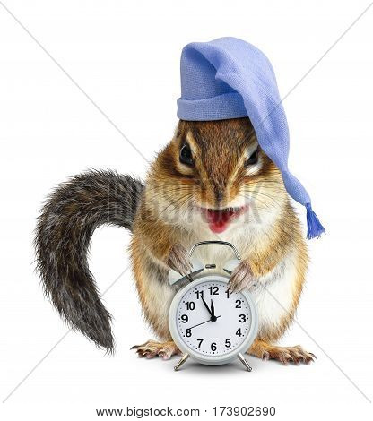 laughable animal chipmunk with clock and sleeping cap