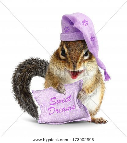 Sweet dreams concept funny animal chipmunk with pillow and sleeping cap