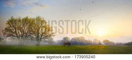 Spring countryside landscape; morning farmland field and blooming tree