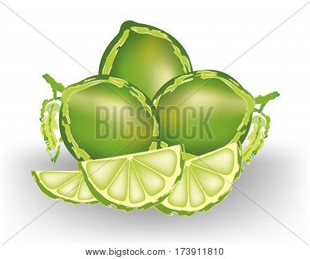Lime fruits and quarter slices on white background