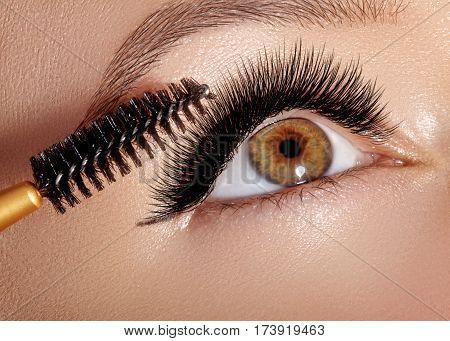 Fashion Woman Applying Eyeshadow, Mascara On Eyelid, Eyelash And Eyebrow Using Makeup Brush. Profess