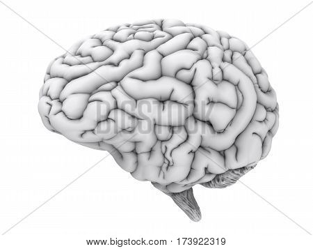 White Human Brain