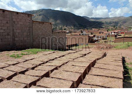 Adobe bricks in the sun to dry