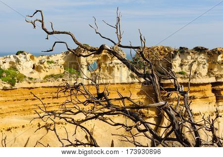 Dead branch in front of the Razorback in the Port Campbell National Park, Great Ocean Road, Victoria, Australia