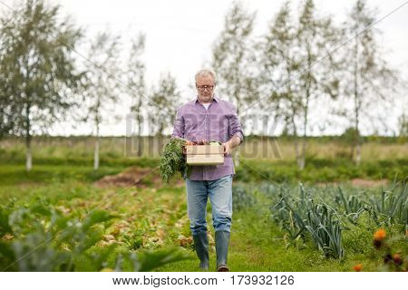 farming, gardening, agriculture and people concept - senior man with box of vegetables at farm garden