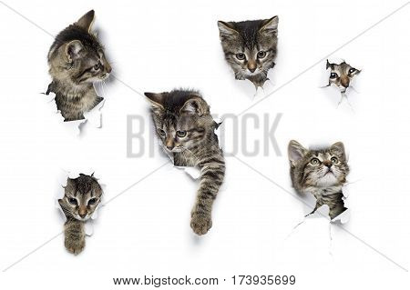 Cats in holes of paper, little grey tabby kittens peeking out of torn white background, six funny playing pets