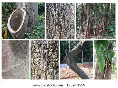 Set of different trees trunks. Trunk set collection tree on the garden or parkland.