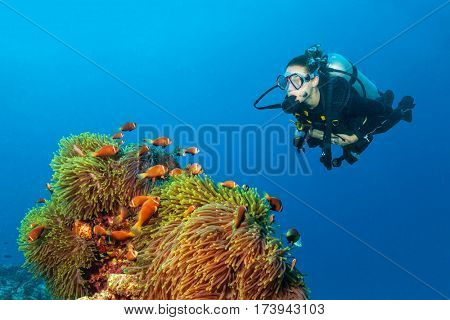 Woman scuba diver exploring anemon with claun fish. Underwater life.
