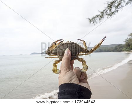 Crab released back into the sea to preserve the ecosystem