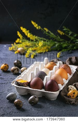 Brown and gray colored chicken and quail Easter eggs in paper box with yolk, yellow flowers, sackcloth rag over black concrete texture background. Copy space