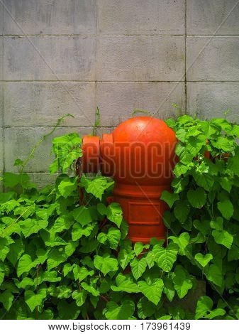 Red fire hydrant in the old city Covered with plant