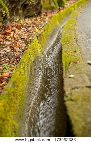 Close-up detail of clear water flowing through a mossy street gutter. Nature and infrastructure concept.