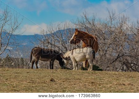 A Horse and Burrows Eating at Feeding Time