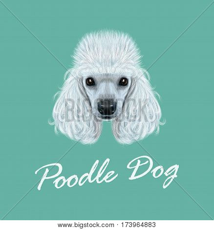 Vector illustrated Portrait of Poodle dog. Cute face of domestic breed dog on blue background.