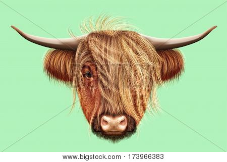 Illustrated portrait of Highland cattle. Cute head of Scottish cattle on light green background.