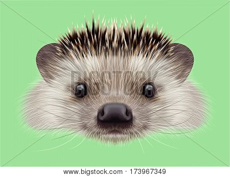 Illustrated portrait of Hedgehog. Cute head of wild spiny mammal on green background.