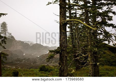 Moss covered trees on a lush misty coastline in British Columbia Canada