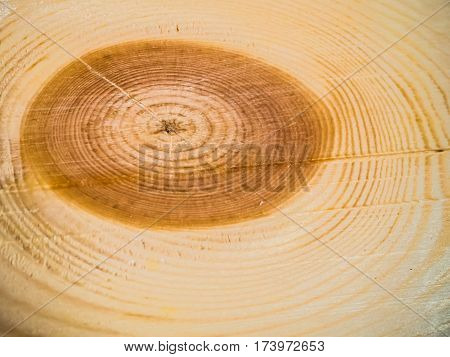 wood texture with gnarl and natural wood pattern