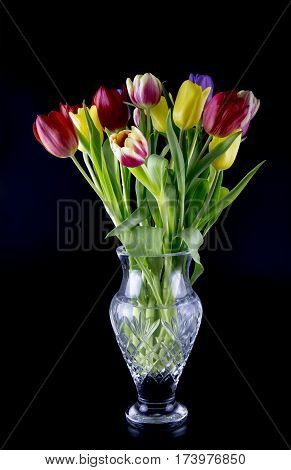 view of a vase of multi coloured tulips on a black background.