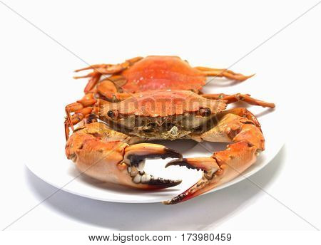 Red crab on white background. Two boiled sea crabs served for eating. Sea crab on plate studio photo for restaurant menu or eatery decor. Fresh seafood cooked. Sea delicatessen. Red cooked crab meat