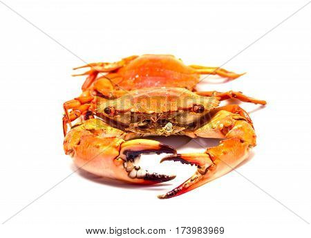 Warm red crabs on white background. Boiled crabs bunch isolated. Fresh sea crabs cooked in hot water. Bright orange crab served for eat. Orange crab photo for restaurant menu or seafood design.