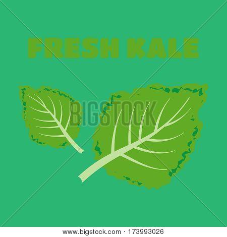 Fresh kale vector illustration. Kale vector set