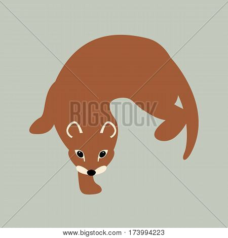 weasel vector illustration style Flat front side