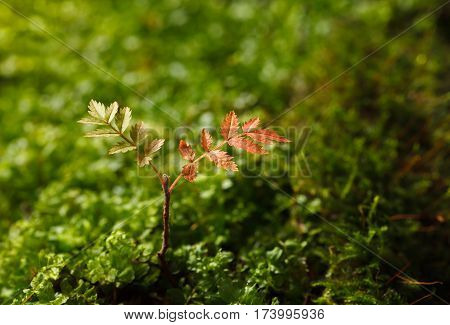 Two Colour Leaves In Spring