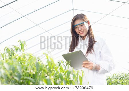 young beautiful chinese woman agronomist working in green house