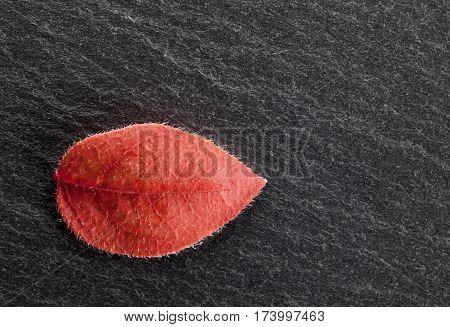 Red Abscised Leaf