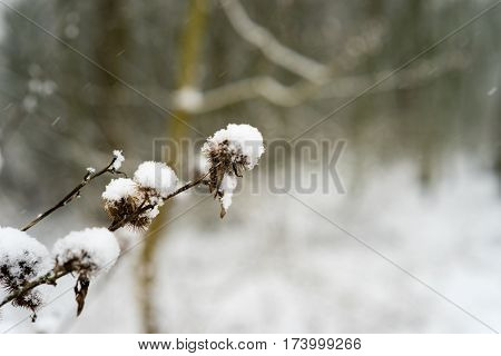 Snow Covered Close-up