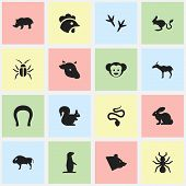 Set Of 16 Editable Zoology Icons. Includes Symbols Such As Bedbug, Footprint, Gazelle And More. Can Be Used For Web, Mobile, UI And Infographic Design. poster
