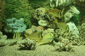 beautiful scenery under water at coral reef ** Note: Slight blurriness, best at smaller sizes poster