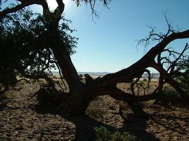 Desert Atmosphere