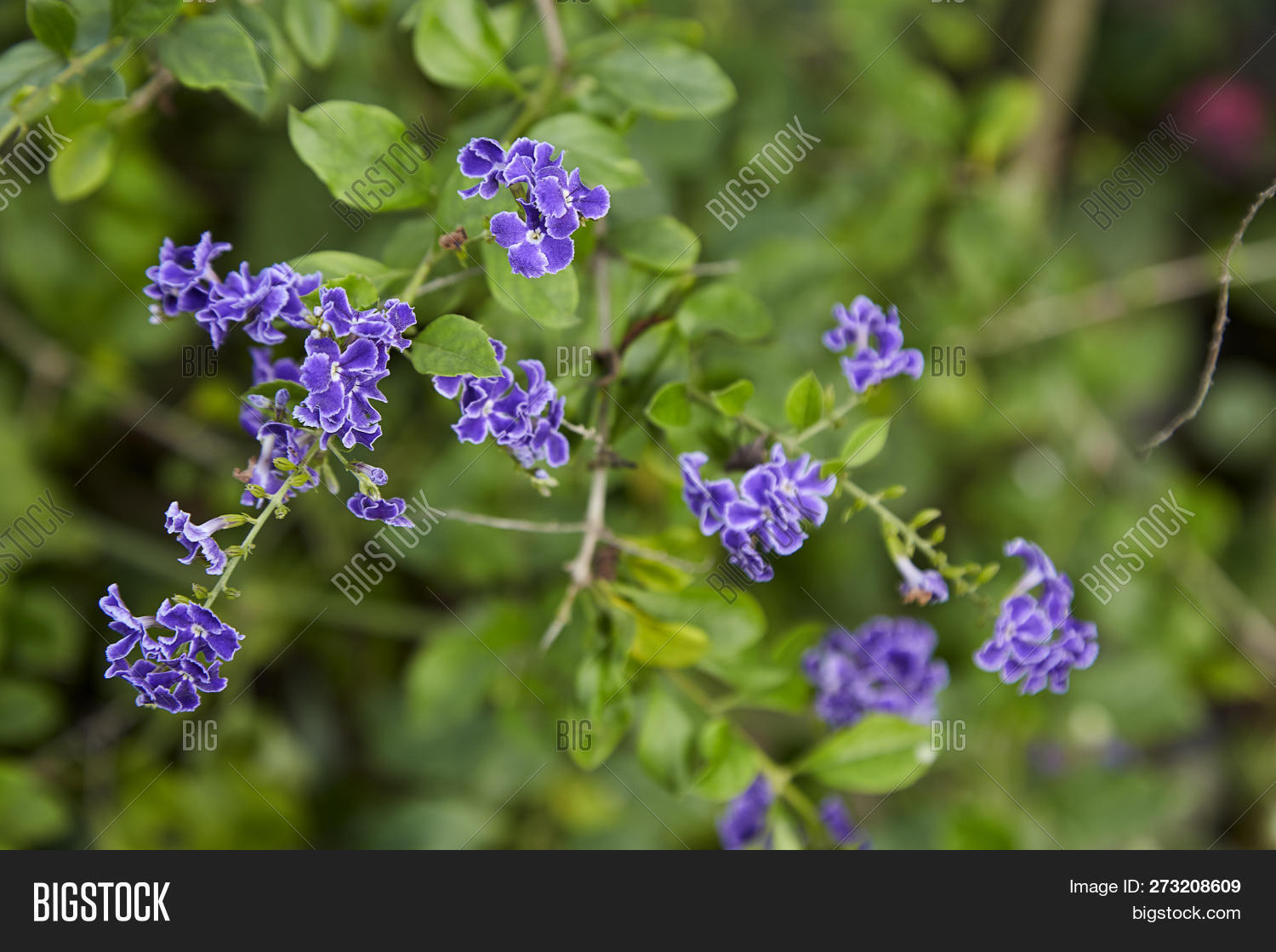 Small Purple Flowers Image Photo Free Trial Bigstock,Goodwill Furniture Donation Drop Off