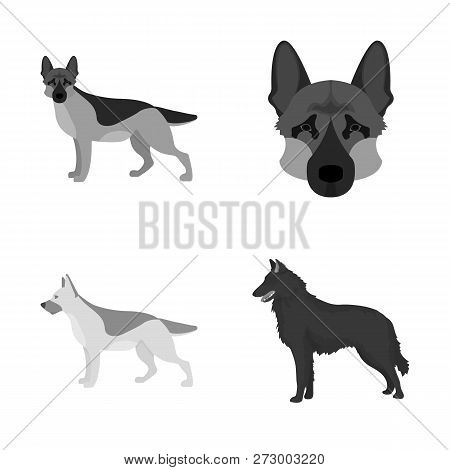 Isolated Object Of  And Sheepdog Icon. Set Of  And German Stock Vector Illustration.