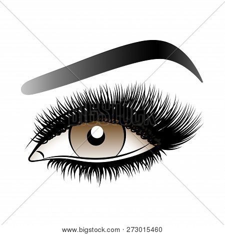 Brown Woman Eye With Long False Lashes With Eyebrows. Vector Illustration Isolated On White Backgrou