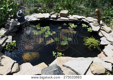 Lily Pond, Goldfish Pond Filled With Clear Water, See Through, Lily Pads, Surrounded By Rocks, Stone