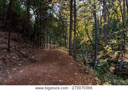 Serene Walking Path Next To The Creek With A Beautiful Glow From The Autumn Leaves