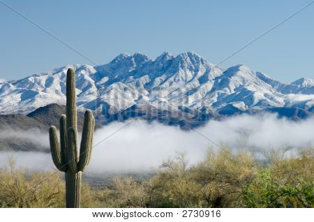 Saguaro And Four Peaks