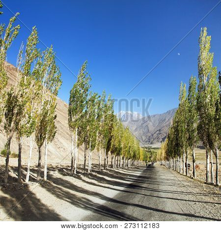 Pamir Highway, Road And Alley Of Poplar Trees And Pamir Mountains, Wakhan Corridor And Valley, Gorno
