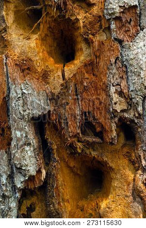 Background, Texture - Rotten Wood Affected By Fungus, With Holes Made By Woodpeckers