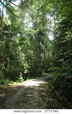 Jungle Trek Path