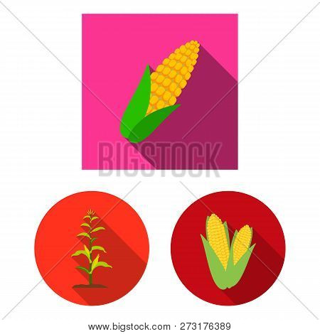 Vector Design Of Corn And Leaf Icon. Set Of Corn And Sweet Stock Symbol For Web.