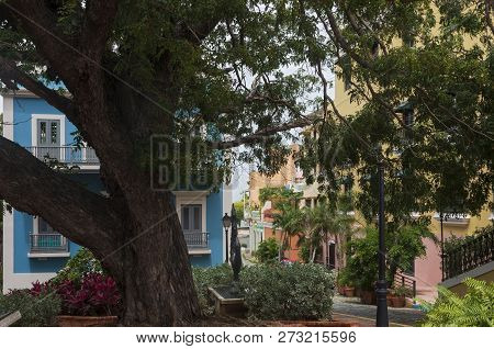 Under Canopy Of Tree At Cathedral Plaza In Old San Juan And Businesses Lining Street