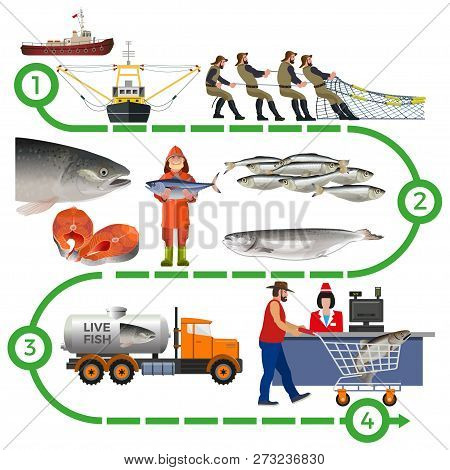 Fish Farming Industry. Supply Chain Infographic. Vector Illustration Isolated On White Background