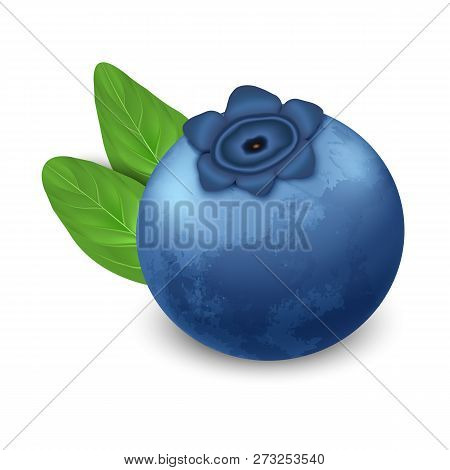 Bilberry Icon. Realistic Illustration Of Bilberry Vector Icon For Web Design Isolated On White Backg