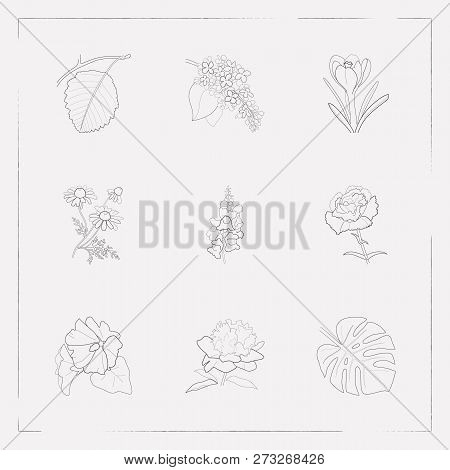 Set Of Botany Icons Line Style Symbols With Mallow, Crocus, Chamomile And Other Icons For Your Web M