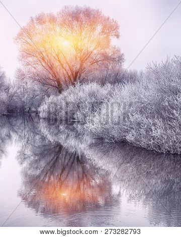 Winter Forest On The River At Sunset. Panoramic Landscape With Snowy Trees Sun Beautiful Frozen Rive