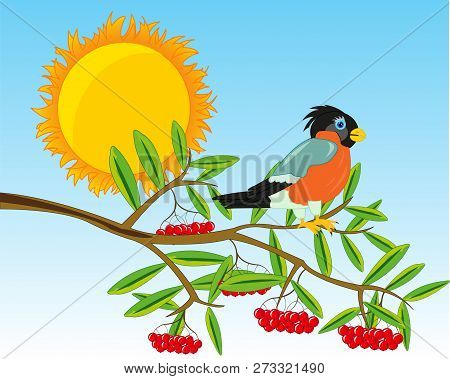 Branch Of Rowanberry With Ripe Berry.vector Illustration